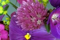 Цветы. Фото с сайта naselo.ru