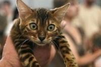 Выставка кошек. Фото с сайта copypast.ru