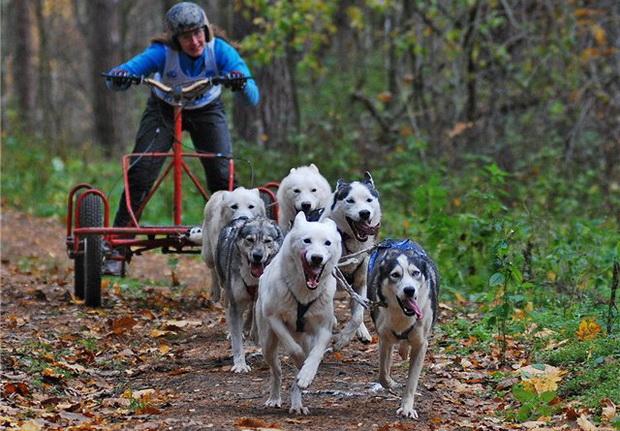На скутере. Фото с сайта labrador.ru